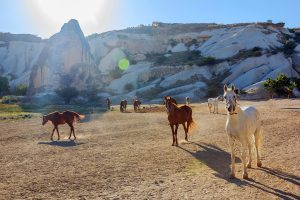 Horses in stable, Goreme, Cappadocia, Turkey
