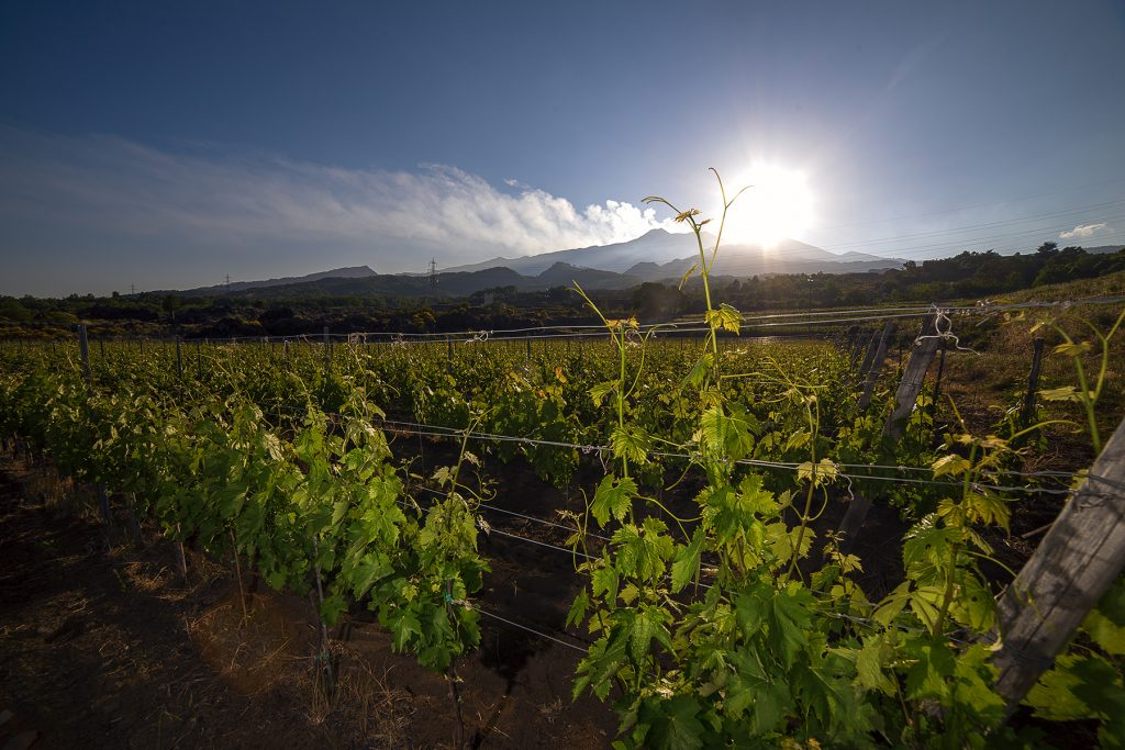 view of a vineyard with Etna volcano in the background